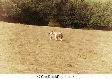 Two horses in the field