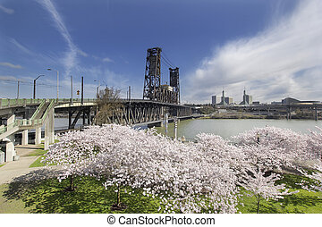 Cherry Blossoms at Portland Waterfront