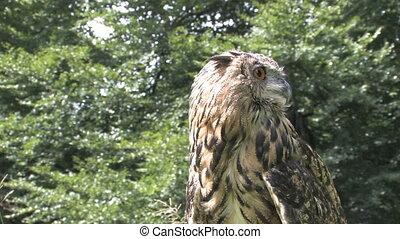 owl outdoor in nature