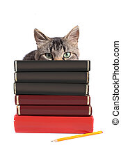 Blank books - Maine Coon cat hiding behind textbooks without...
