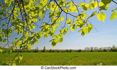 spring leaves, landscape