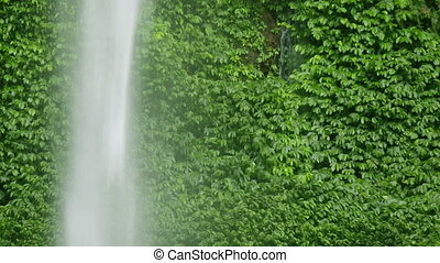 Lush leaves and waterfall