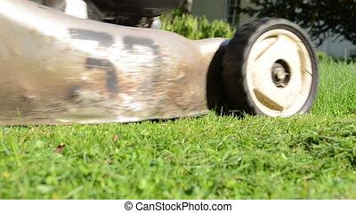 meadow grass cut grass - Closeup of meadow green grass and...