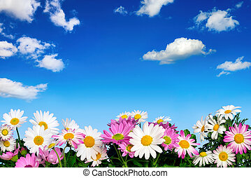 Flower bed and blue sky - Lush flower bed with white and...