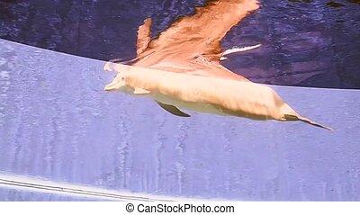 Dolphin, Underwater Sea Life