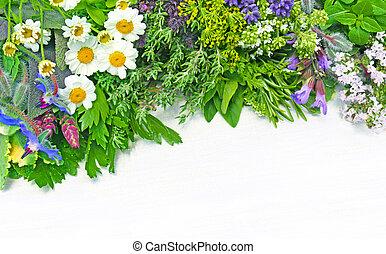 fresh medicinal herbs - various fresh medicinal herbs