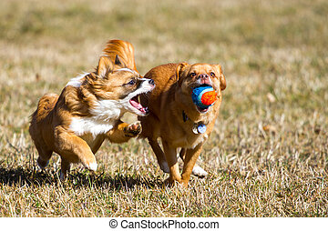 Action Dog with a ball