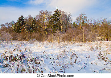 winter snowy landscape at sunset - frozen trees in snow...