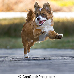 High-spirited Little Guy - Little puppy with high-spirited...