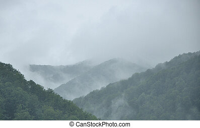 fog above the woody mountains - fog above the woody slopes...