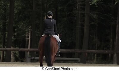 show jumping with horses