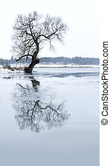 Bare tree reflected in river with melting ice