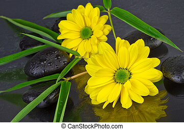 flowers with spa stones and bamboo leafs