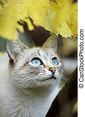 cat - Grey cat with blue eyes in autumn wood