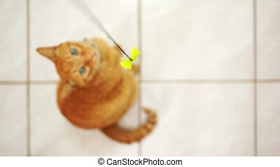 Disabled Feline Jumping for String - Amputee, orange tabby...