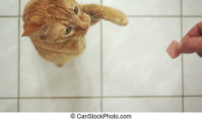 Disabled Three Legged Cat Treat - A disabled, three legged,...