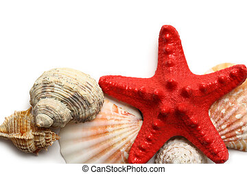 Seastar and seashells on white