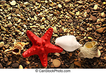 Seastar on pebbles - Seastar and seashells on pebbles