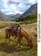 Mountain Horse under Saddle - Red Dun mountain horse under...