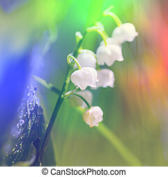 Lilly of the valley