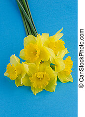 Jonquil flowers - Yellow jonquil flowers on blue background.