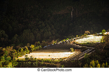 Nightscape of Greenhouse Plant and waterfall, Doi Inthanon, Chiang Mai, Thailand