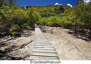 trailway through the mangroves - trailway through the...
