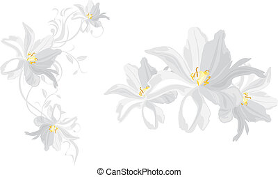 White flowers isolated on the white. Vector illustration