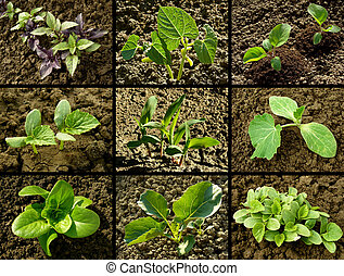 seedlings set - set of seedlings growing on the vegetable...