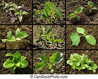 seedlings set - set of seedlings growing on the vegetable...