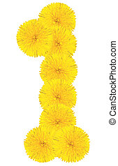 Number 1 made from dandelion flower isolated on white...