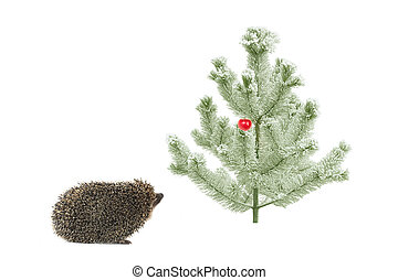 fir-tree  - hedgehog near a fir-tree with apple
