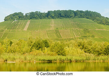 vines on the hill
