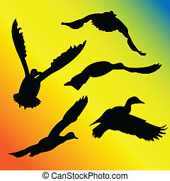 Ducks flying silhouettes against a colorful background