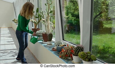 cactus watering woman - Various cactus plants grow in...