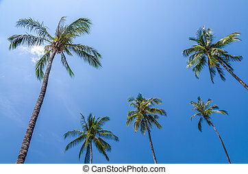 Coconut tree with blue sky in sunny day