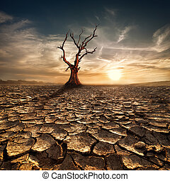 Global warming concept. Lonely dead tree