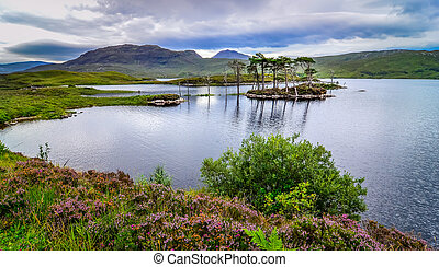 Landscape view of trees in a lake at Scottish highlands