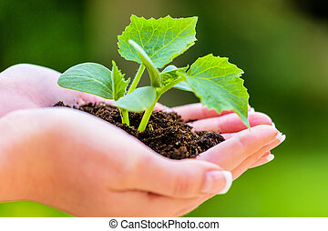 woman holding plant in her hand symbolic photo for growth...