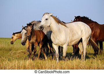 Horses galloping on field