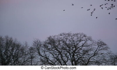 crows fly in the sky and land on the tree