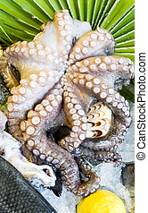 Octopus Seafood - Stock Image