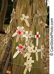Poppies at a tree with barbed wire flanders fields