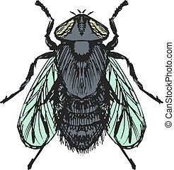 ordinary fly - hand drawn, sketch, cartoon illustration of...