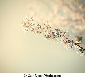 Vintage flowers - Vintage cherry blossom. Antique style...