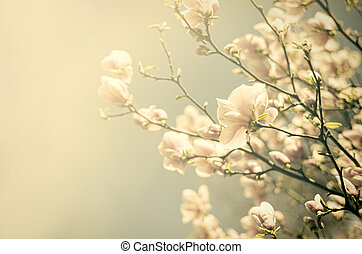 Vintage flowers - Vintage cherry blossom Antique style photo...