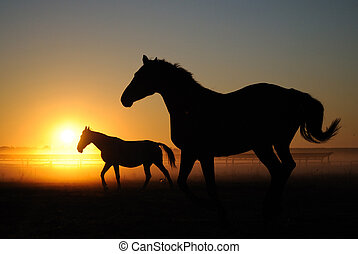 A herd of horses at dawn. Horses come in a landscape at...