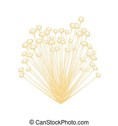 A Group of Enoki Mushrooms on White Background - Vegetable,...