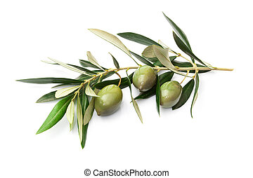 Olives on branch with leaves isolated on white