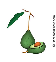 Two Fresh Green Avocados on White Background - Vector...